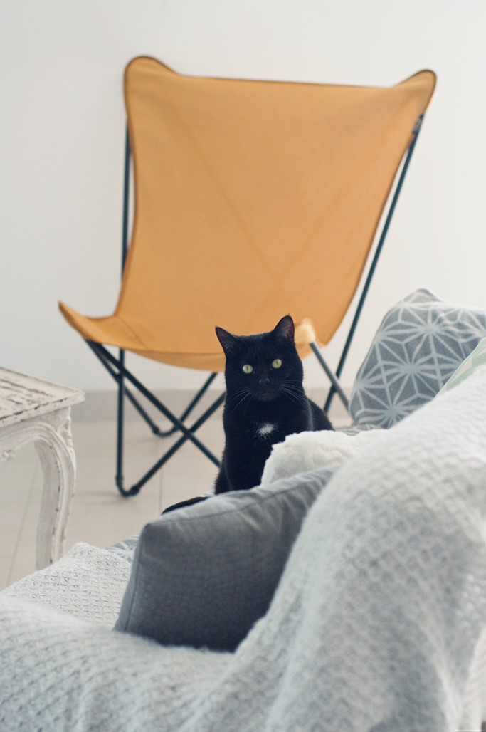 Chat noir canape blog lifestyle Alexiane
