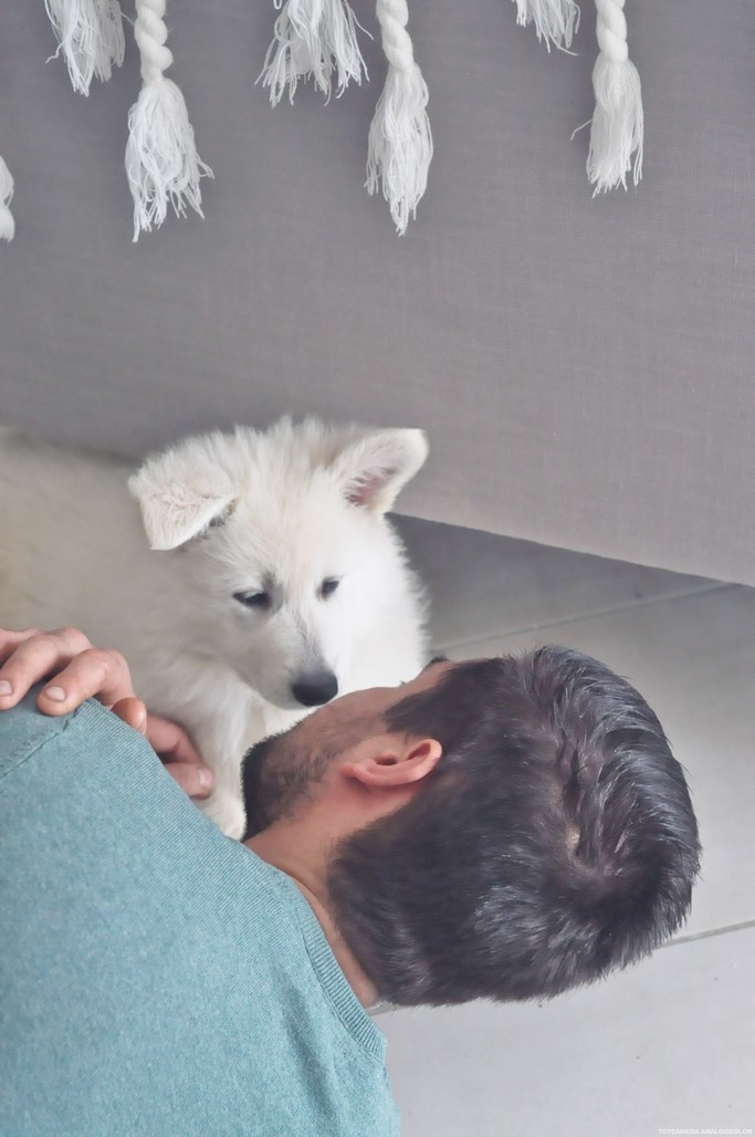 Berger blanc Suisse 2 mois bebe baby puppy chiot chien white dog blog Alexiane