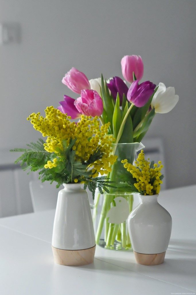 Tulipes roses violettes blanches Mimosa fleurs