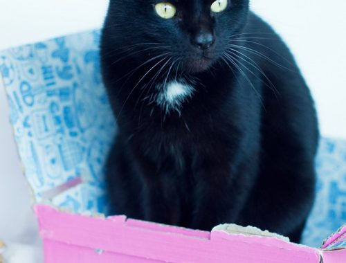 Chat noir Miaoubox